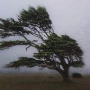 До 100 км/ч поривите на вятъра в Русе