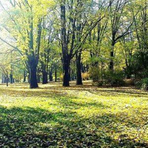 Есента дойде. Честита златна есен!