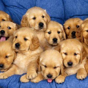 Само 7 домашни кучета регистрирани в Русе