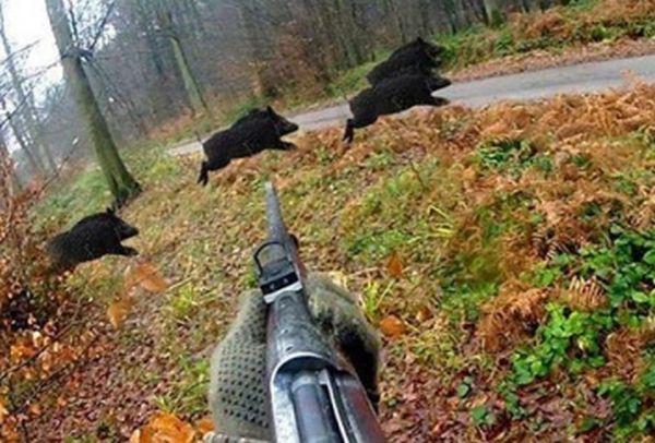 Ловците в Русенско отменят насрочения за неделя