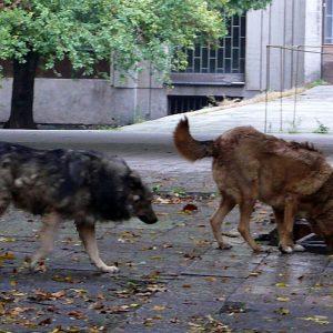 Русенци: Неасфалтирани улици, паркинги, неокосена трева, бездомни кучета