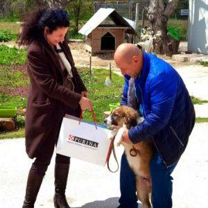 Стимулират осиновяването на животни от Общинския приют в Русе