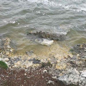 """Умряла риба в езерото """"Липник"""", отговорни няма"""